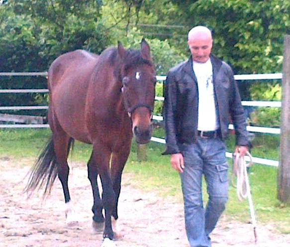 Il cavallo come guida alla scoperta di Sè